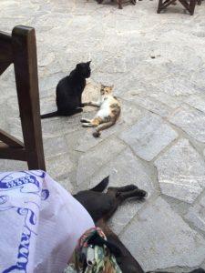 客の足元でくつろぐ犬と猫たち