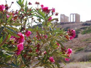 ミュージアムショップの方角から見たポセイドン神殿