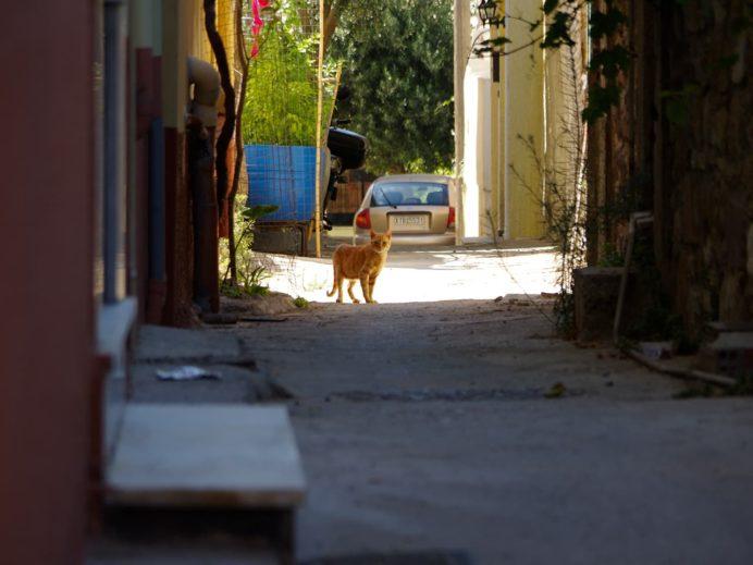 ヒオス旧市街の路地で見かけた猫