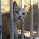 ヒオスタウンの道すがら出会った猫