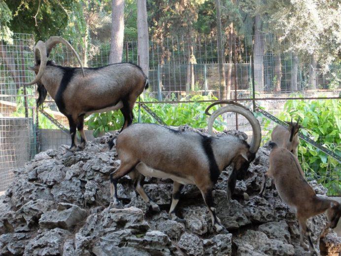 国立庭園内の動物園